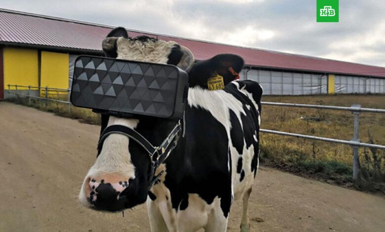 cow io
