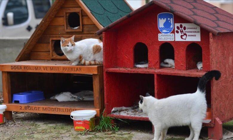 kuca za macke i pse AA