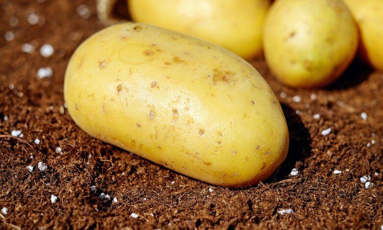 potatoes 1585057 960 720
