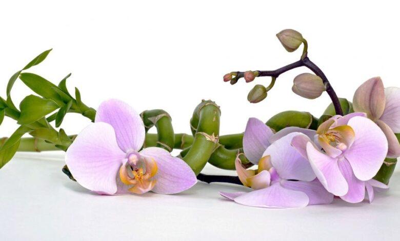 orhideja ilustracija