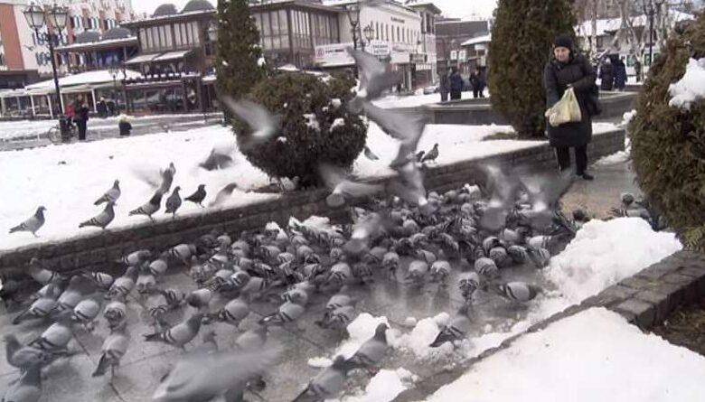 golubovi 1 800x445